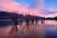 Trees in Glenorchy