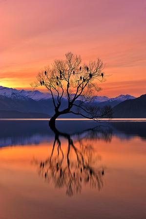 Lone Tree is not Lonely